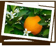 orangenblueten