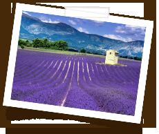 Honig-aus-Sudfrankreich